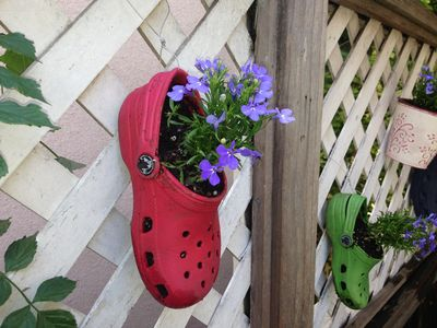Crocs as planter